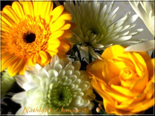 bouquetdejanvier070131.jpg